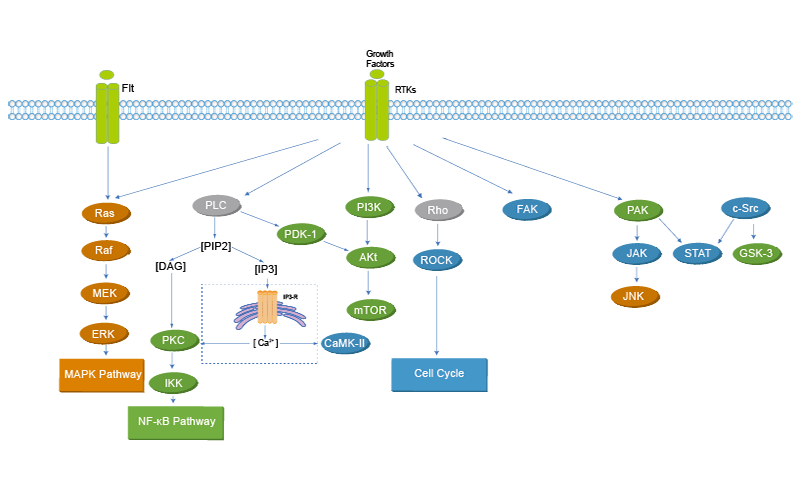Protein Tyrosine Kinase/RTK (Inhibitors Agonists ...